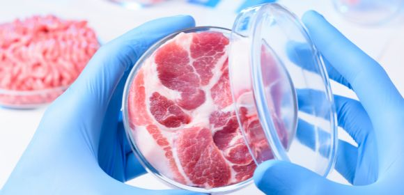 Meat sample in open laboratory Petri dish. Animal cell cultured clean meat concept