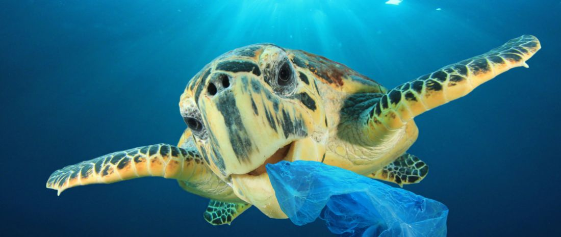 Plastic pollution problem - Sea Turtle eating plastic bag polluting ocean