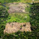 An areal view of a forest with plots in various stages of deterioration