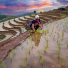 Tribal farming rice in rice terraces on mountain of twilight