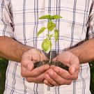 Man holding seedling, mid section