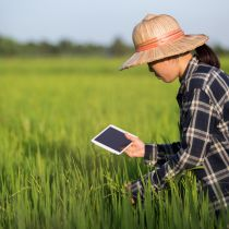 Smart Farmer / Asian girl holding a tablet is checking the growing rice production in her farm
